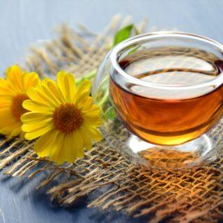 recept na pampeliškový med